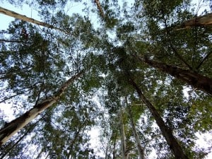 Esquadrias de Eucalipto - Esquadrias ecológicas - Fábrica - Janelas de Eucalipto